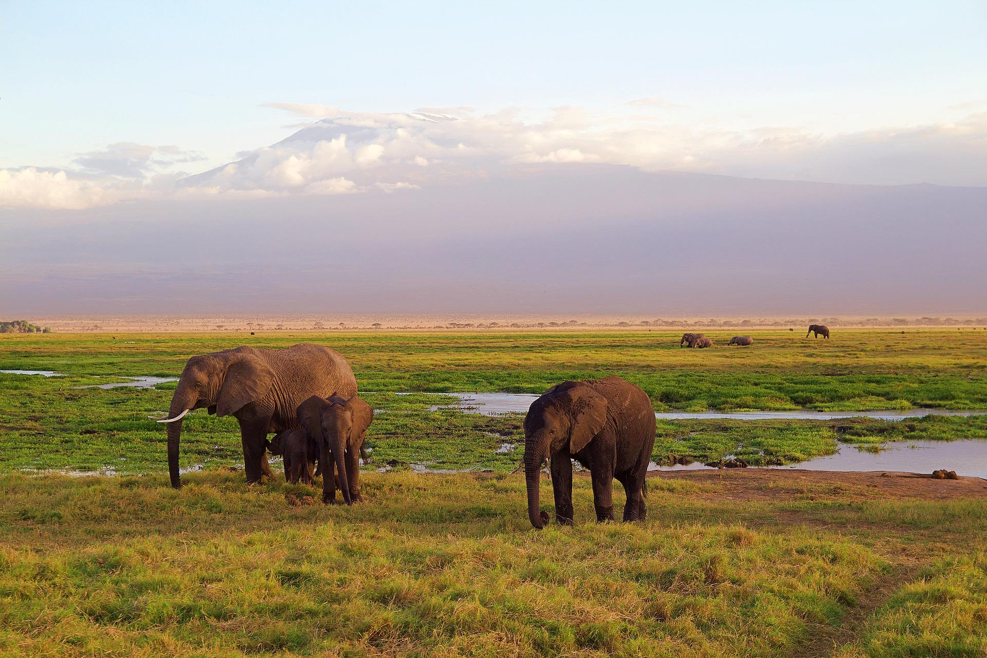 Kenya – Covid-19